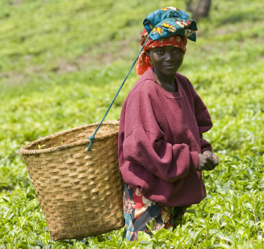 Sustainable Agriculture and Rural livelihoods